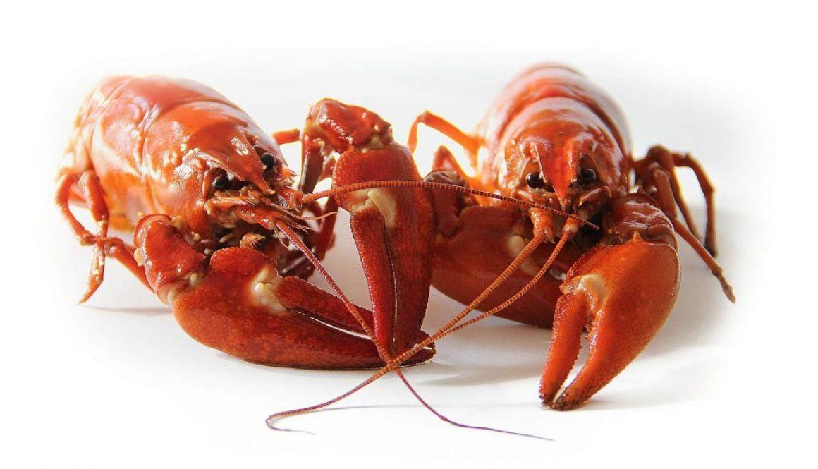 crayfish-423251_1920 (2) (1)